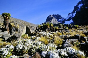 Mt.Kenya – a rare glimpse of sun