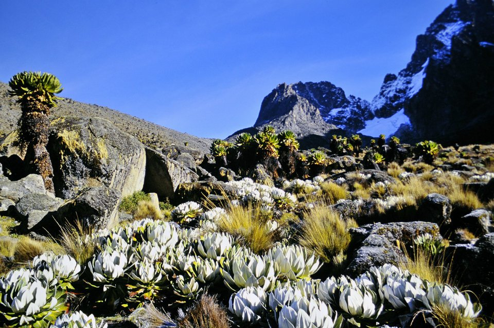 Mount Kenya National Park/Natural Forest