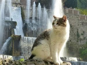 Renaissance Fountains and Gardens