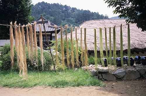 Weaving of Mosi (fine ramie) in the Hansan region