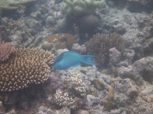 Proof for Great Barrier Reef