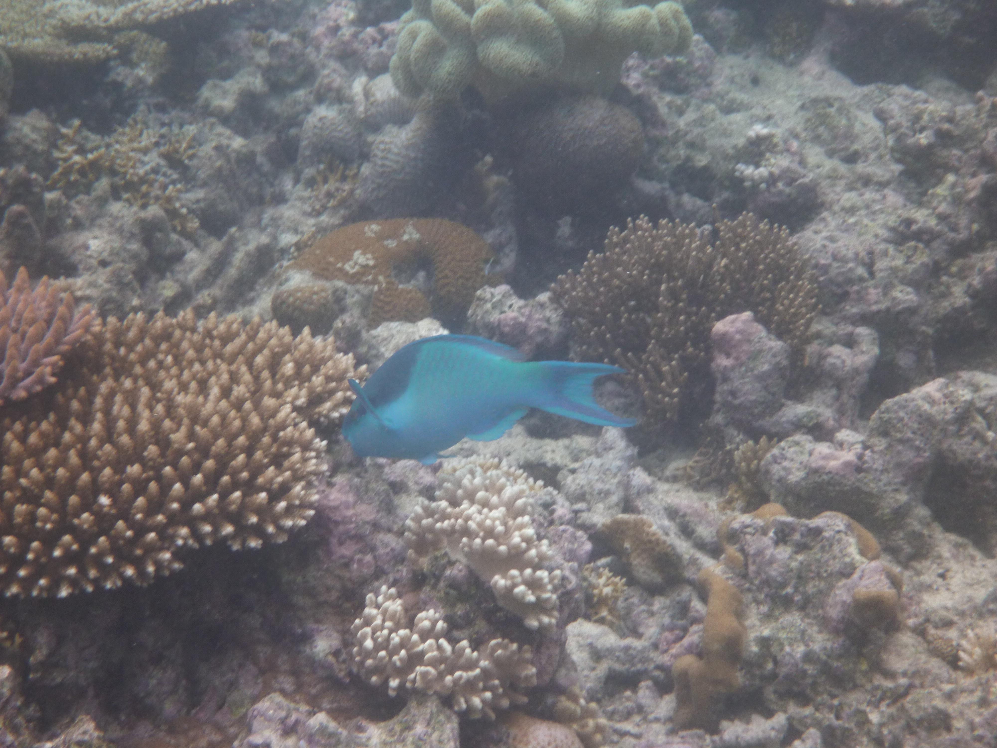 Underwater - Great Barrier Reef Nivedita Chaman