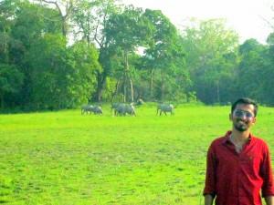 Wildlife at Kaziranga
