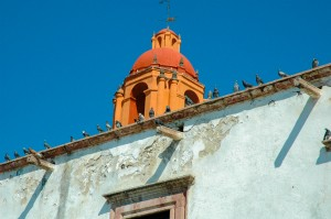 Birds on a wall, San Miguel de Allende