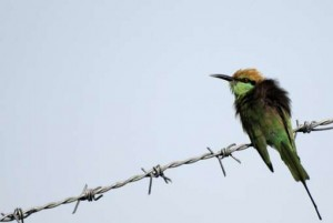 Watch birds at Bidar