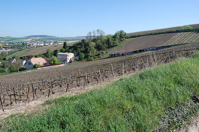 Champagne Hillsides, Houses and Cellars