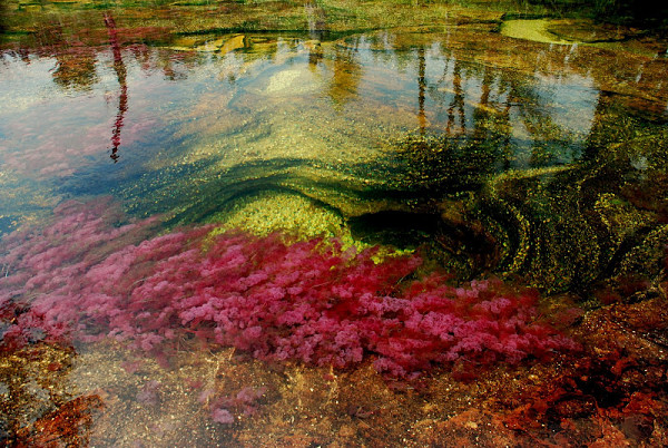 Cano-Cristales-of-Columbia