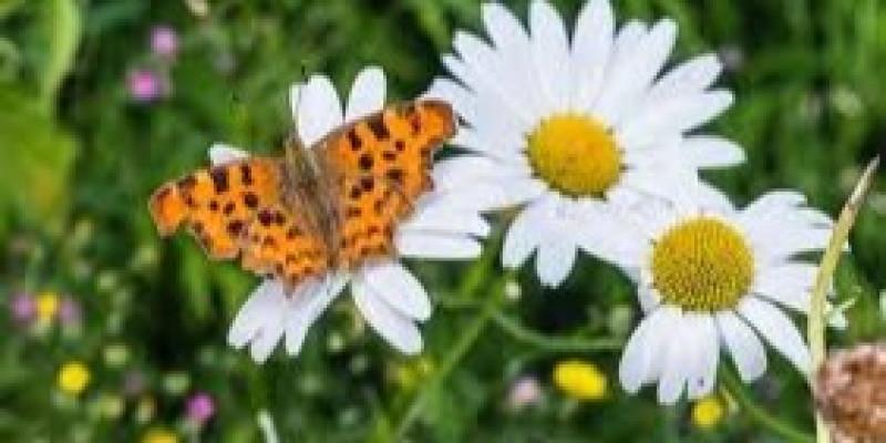 Guru Berbagi Flora Fauna Dan Alam Benda