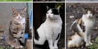 Binatang/ Vivipar/ Kucing