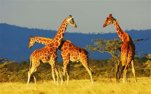 09 Day's in Kenya  -  A camping safari experience with a beach stay in Mombasa