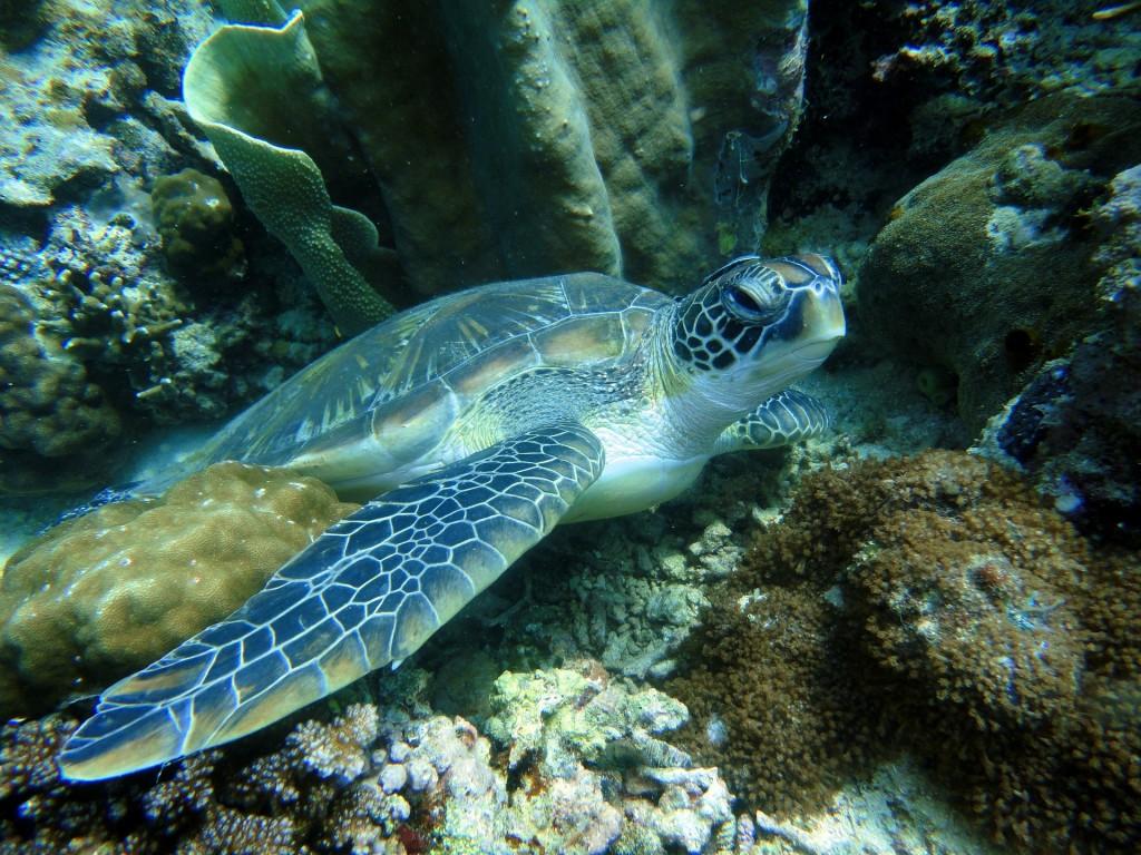 turtle-322416_1920