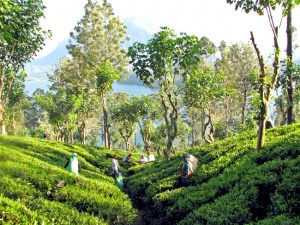Top 7 Must-See Attractions in Kandy for Muslim Travelers