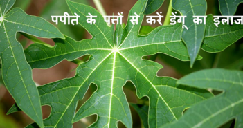 5-Amazing-Health-Benefits-Of-Papaya-Leaves-To-Cure-Dengue