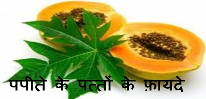 amazing health benefits of papaya leaves cover
