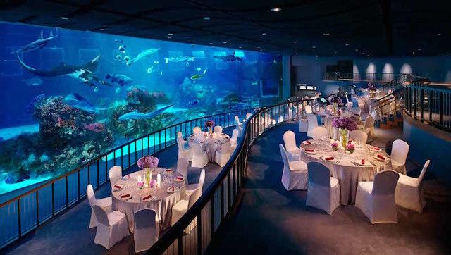 Ocean Gallery, S.E.A. Aquarium