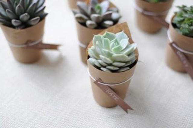 Customized Succulents in Pots