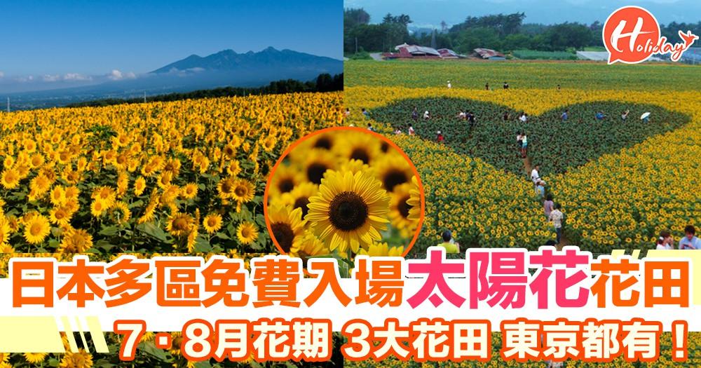 免費入場!日本3大太陽花海 東京近郊都有得睇!7·8月花期~