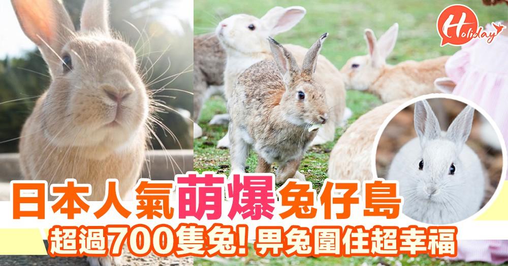 日本人氣萌爆兔仔島! 超過700隻兔! 畀兔兔圍住超幸福~