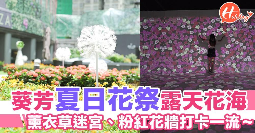 葵芳「色彩夏日花祭」!露天花園、薰衣草迷宮、粉紅花牆打卡一流~