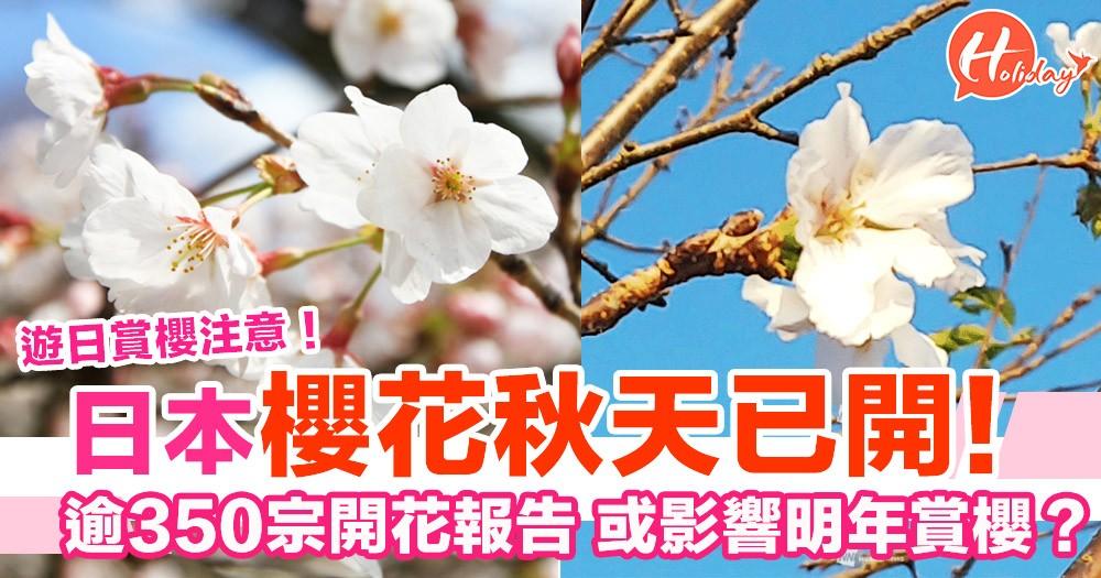 遊日賞櫻注意 日本櫻花秋天已開!逾350宗開花報告 或影響明年賞櫻?