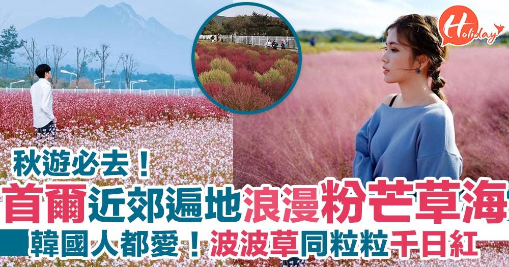 秋遊首爾必去!一次睇晒遍地粉紅海 粉紅芒草+紅色波波掃帚草+粒粒千日紅