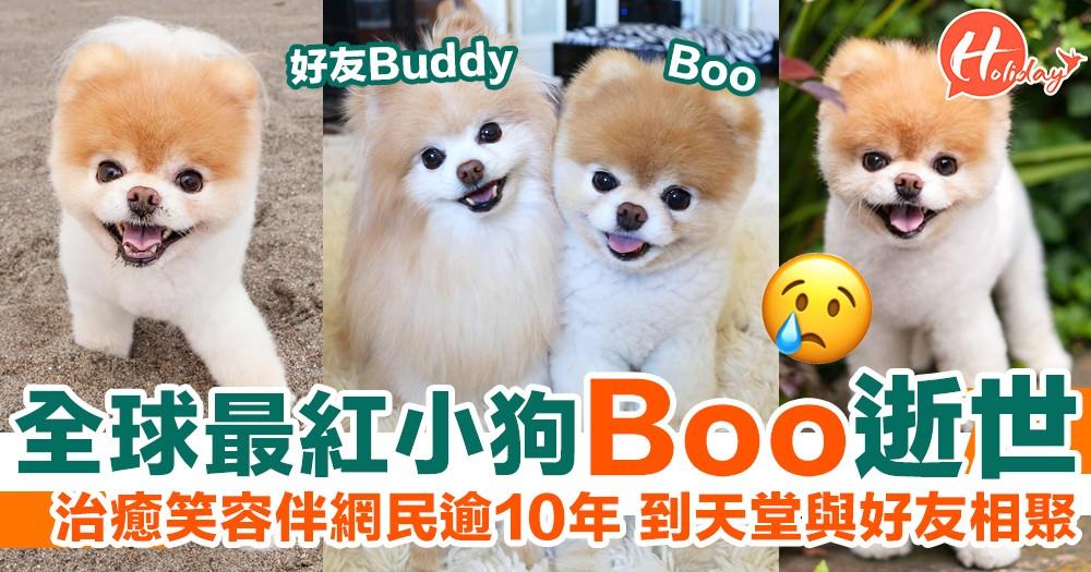 全球最紅小狗Boo逝世!治癒笑容伴網民逾10年 到天堂與好友相聚!
