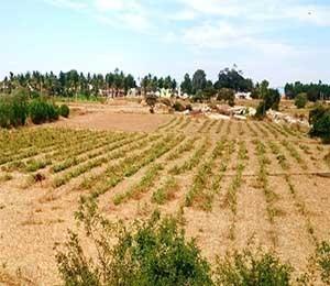 Krushi nandi enclave plot tile