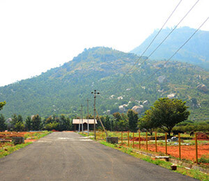 Sizzle nandi valley plot   smalltile