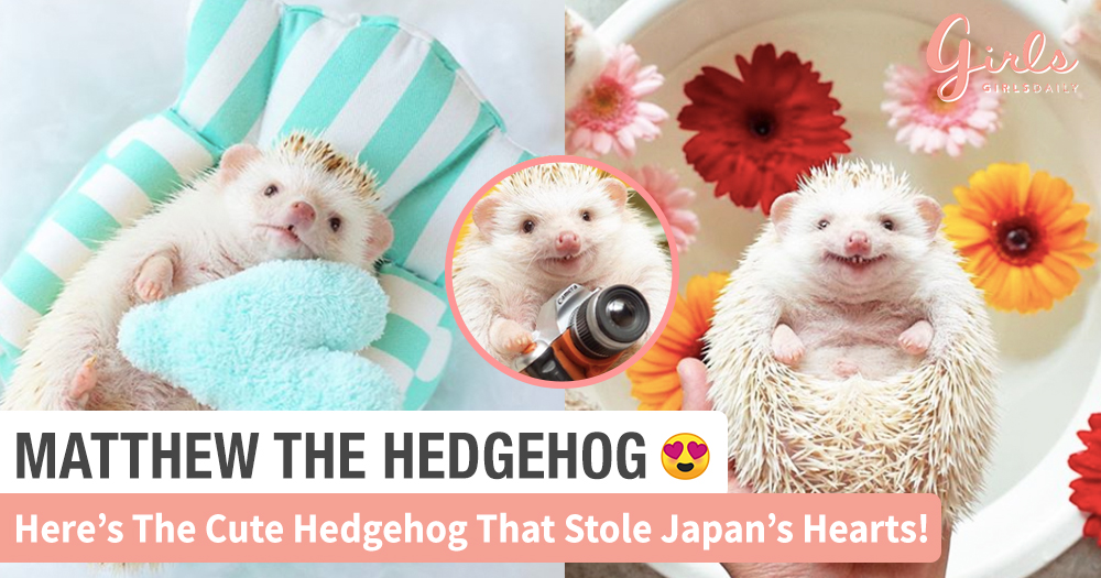 OMG! Matthew The Flying Hedgehog Is Melting Our Hearts With His Million-Dollar Smile