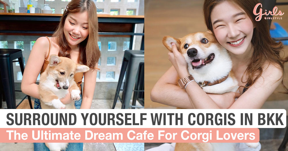 This Bangkok Café Is Every Corgi Lover's Idea Of Paradise