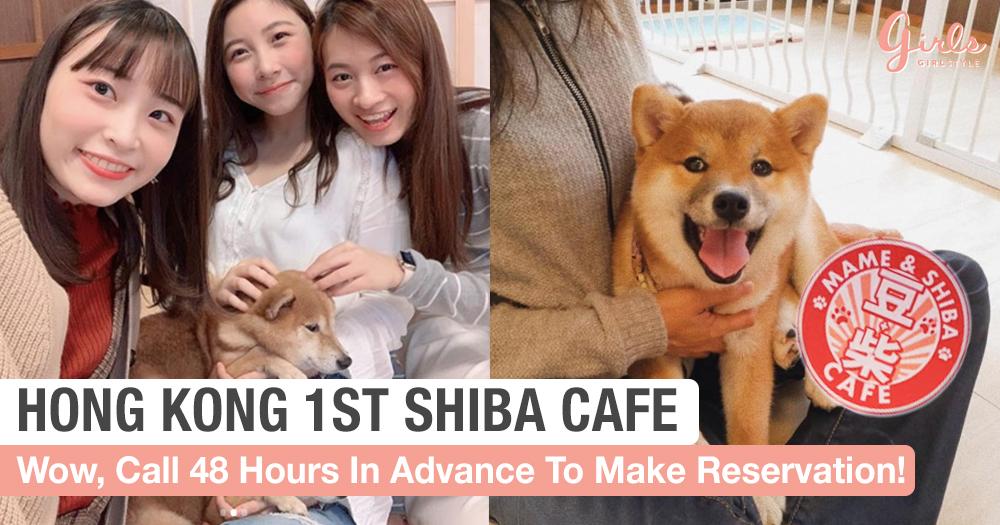 10 Shiba Dogs Dominate Hong Kong's First Interactive Shiba Cafe