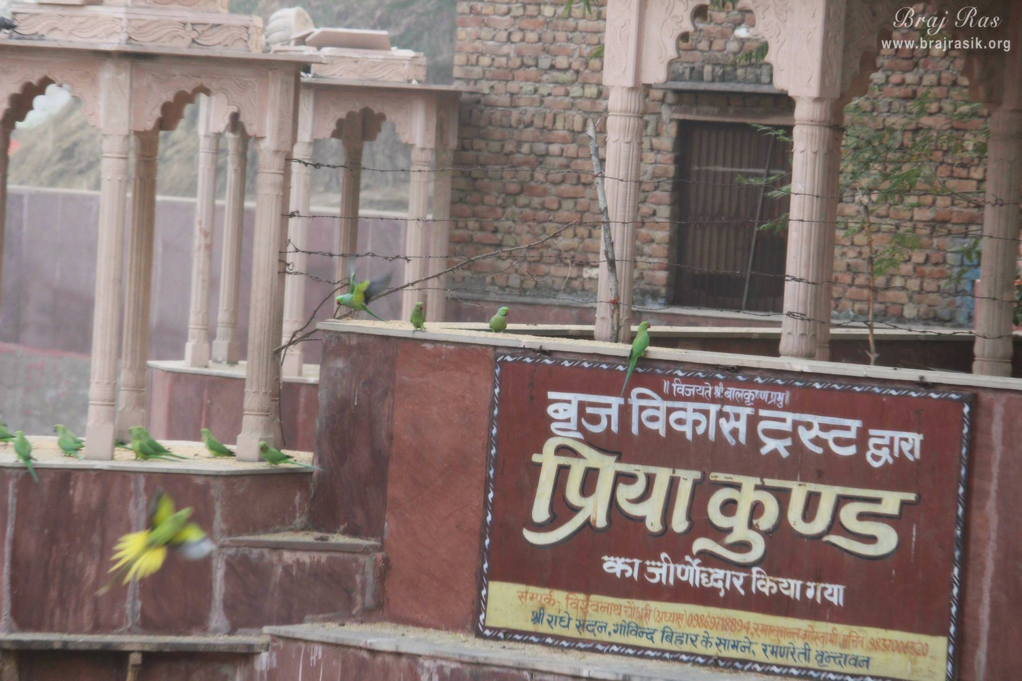 Priya Kunda (Peeli Pokhar), Barsana - Divine Pastimes