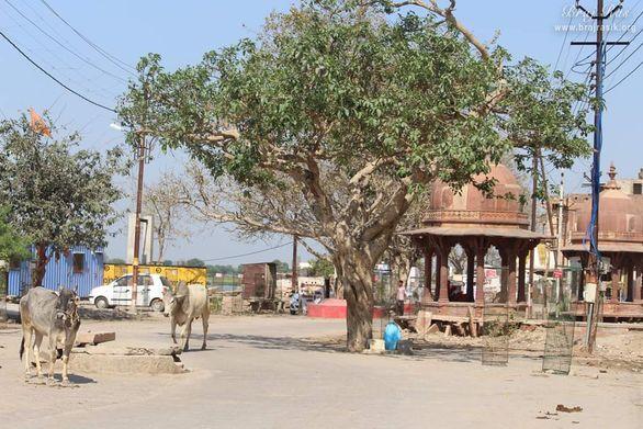 Parikrama Marg - Vrindavan Dham