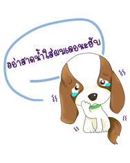 Songkran Dog