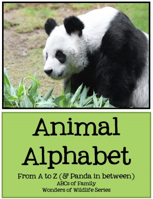 Animal Alphabet - From A to Z (& Panda in Between)