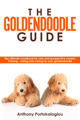 The Goldendoodle Guide