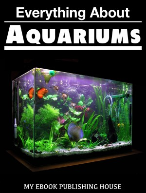 Everything About Aquariums