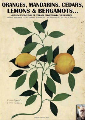 Oranges, mandarins, cedars, lemons and bergamots... by Luca Stefano Cristini from StreetLib SRL in Science category
