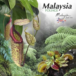 Malaysia FOLIAGE by Tourism Malaysia from Tourism Malaysia in Travel category