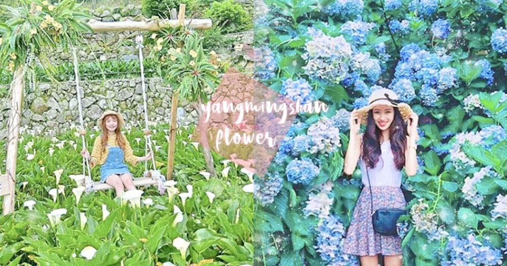 花都開好了~陽明山私房景點一日遊!「海芋鞦韆」還有「繡球花牆」好好拍~
