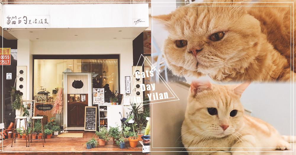 想在這跟貓大人耍廢一整天!宜蘭「貓的生活提案」是貓奴der遊樂天堂~還不快來拜見主子們♥