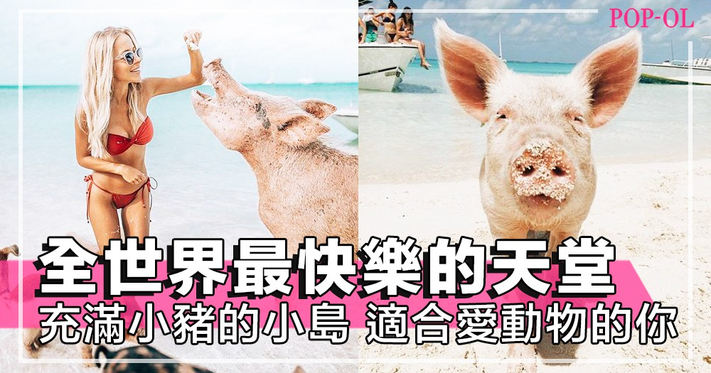 跟可愛小豬最近距離的接觸?全世界最快樂的「小豬天堂」:西印度巴哈馬群島,適合喜歡小動物的你~!
