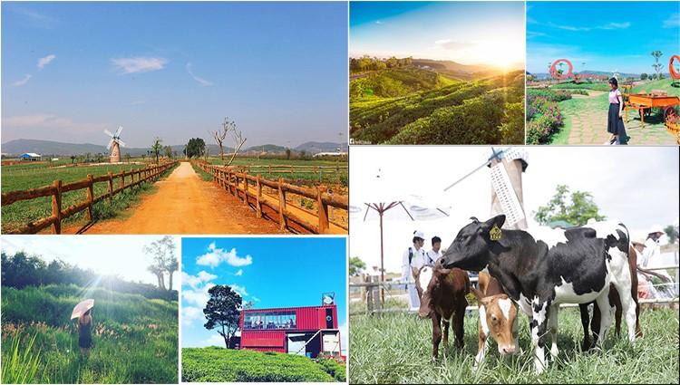 3 nông trại ở Đà Lạt tha hồ cho bạn chụp 1001 kiểu ảnh sống ảo
