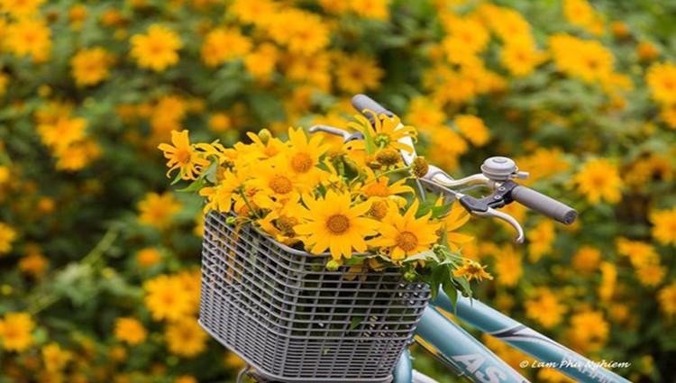 Rong ruổi những cung đường hoa dã quỳ Đà Lạt