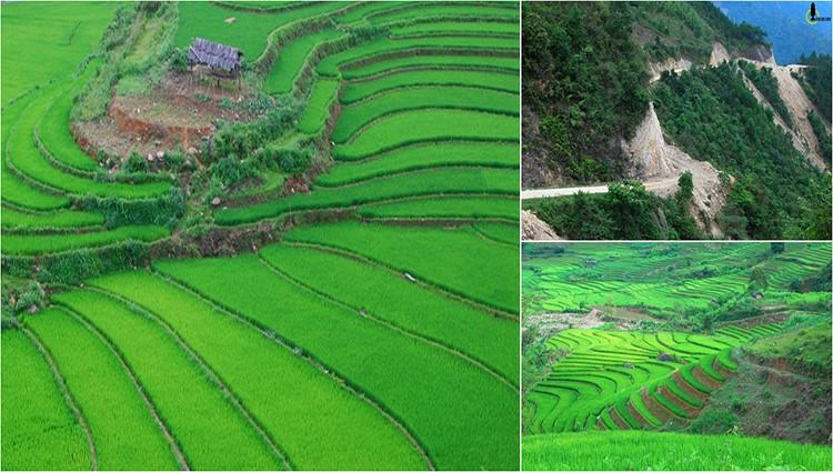 Xanh rì thung lũng lúa trong cõi rừng ở Yên Bái