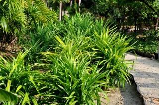 Spice & Herbs Garden