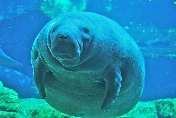Top 10 Slowest Animals In The World 1