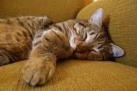 hình ảnh : thú vật, màu xanh lá, Mèo con, con mèo, Động vật có vú ...