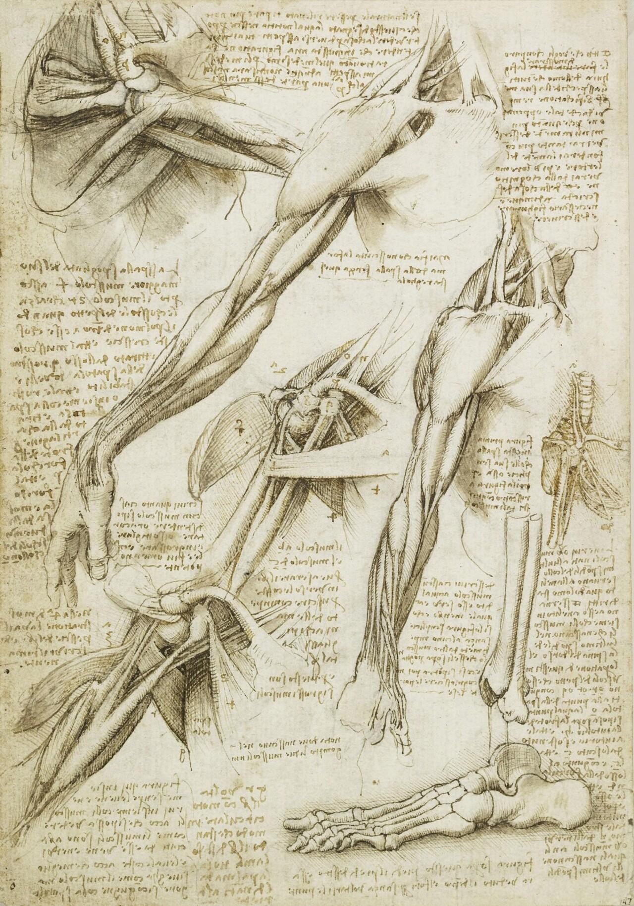 Một vài ghi chép của Leonardo về giải phẫu (nguồn: Medium)