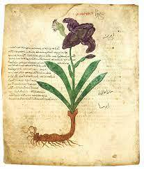 Review of Plant World of the Bible: Four different Scientists | Hans Arne  Jensen